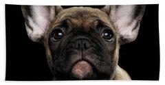 Closeup Portrait French Bulldog Puppy, Cute Looking In Camera Beach Towel by Sergey Taran