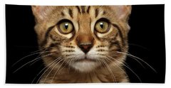 Closeup Portrait Of Bengal Kitty Isolated Black Background Beach Towel by Sergey Taran
