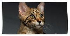 Closeup Portrait Of Bengal Male Kitty On Dark Background Beach Towel by Sergey Taran