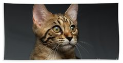 Closeup Portrait Of Bengal Male Kitty On Dark Background Beach Sheet by Sergey Taran