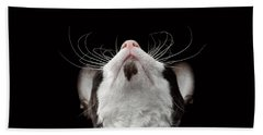 Closeup Portrait Of Cornish Rex Looking Up Isolated On Black  Beach Towel by Sergey Taran