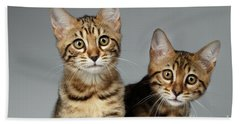 Closeup Portrait Of Two Bengal Kitten On White Background Beach Towel by Sergey Taran
