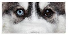 Closeup Siberian Husky Puppy Different Eyes Beach Towel by Sergey Taran
