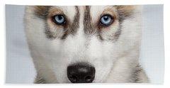 Closeup Siberian Husky Puppy With Blue Eyes On White  Beach Sheet by Sergey Taran