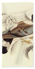 Columba Leuconota, Snow Pigeon Beach Towel by Elizabeth Gould
