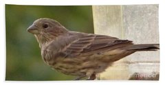 Crossbill Female Portrait      September    Indiana Beach Towel by Rory Cubel