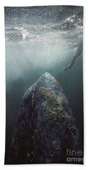 Curious Gray Whale And Tourist Beach Towel by Tui De Roy