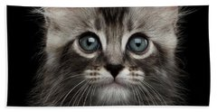 Cute American Curl Kitten With Twisted Ears Isolated Black Background Beach Sheet by Sergey Taran