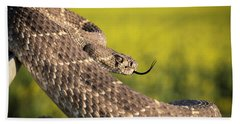 Diamondback And Canola Field Beach Towel by Chris Harris