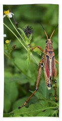 Eastern Lubber Grasshopper  Beach Sheet by Saija  Lehtonen
