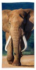 Elephant Approaching Beach Sheet by Johan Swanepoel