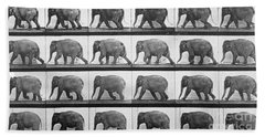 Elephant Walking Beach Towel by Eadweard Muybridge