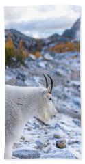 Enchantments Local Goat Resident Beach Sheet by Mike Reid