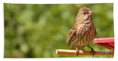 Female Crossbill At Feeder      Summer      Indiana Beach Towel by Rory Cubel