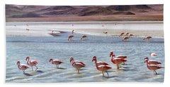 Flamingos Beach Sheet by Sandy Taylor