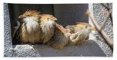 Four Stooges - Guira Cuckoos Beach Towel by Gary Whitton