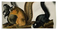 Fox Squirrel Beach Sheet by John James Audubon