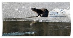 Frosty River Otter  Beach Towel by Mike Dawson