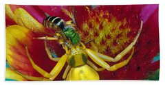 Goldenrod Crab Spider Misumena Vatia Beach Towel by Panoramic Images