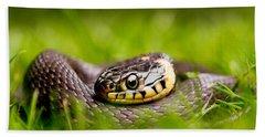 Grass Snake - Natrix Natrix Beach Sheet by Roeselien Raimond