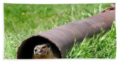 Groundhog In A Pipe Beach Sheet by Will Borden