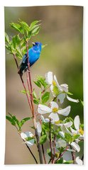 Indigo Bunting In Flowering Dogwood Beach Sheet by Bill Wakeley