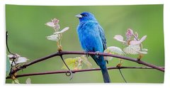Indigo Bunting Perched Beach Sheet by Bill Wakeley