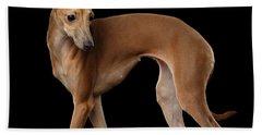 Italian Greyhound Dog Standing  Isolated Beach Sheet by Sergey Taran
