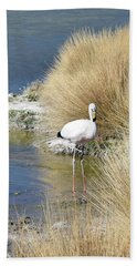 Juvenile Flamingo No. 64 Beach Sheet by Sandy Taylor