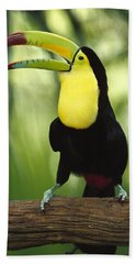 Keel Billed Toucan Calling Beach Towel by Gerry Ellis