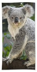 Koala Female Portrait Beach Sheet by Jamie Pham