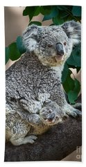 Koala Joey And Mom Beach Sheet by Jamie Pham