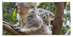 Koala Joey On Mom Beach Sheet by Jamie Pham