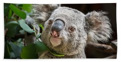 Koala Male Portrait Beach Sheet by Jamie Pham