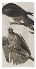 Labrador Falcon Beach Towel by John James Audubon