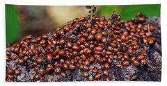 Ladybugs On Branch Beach Towel by Garry Gay