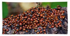 Ladybugs On Branch Beach Sheet by Garry Gay