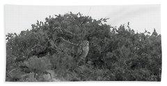 Lesser Horned Owl Beach Towel by Sandy Taylor