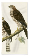 Levant Sparrow Hawk Beach Towel by English School
