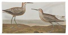 Long-legged Sandpiper Beach Sheet by John James Audubon