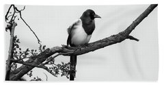 Magpie  Beach Towel by Philip Openshaw