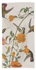 Mango Humming Bird Beach Towel by John James Audubon
