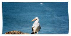 Nazca Booby On A Rock Beach Sheet by Jess Kraft