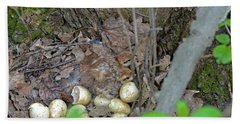 Newly Hatched Ruffed Grouse Chicks Beach Towel by Asbed Iskedjian