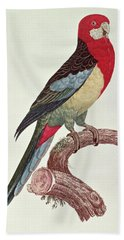 Omnicolored Parakeet Beach Towel by Jacques Barraband