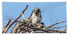 Osprey Eyes Beach Towel by Paul Freidlund