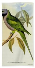 Parakeet Beach Towel by John Gould