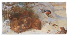 Partridge And A Bullfinch In The Snow  Beach Towel by Archibald Thorburn