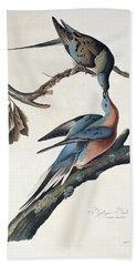 Passenger Pigeon Beach Sheet by John James Audubon