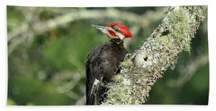 Pileated Perch Beach Towel by Al Powell Photography USA